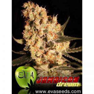 jamaican-dream-Growcenter