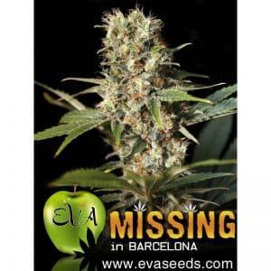 missing-in-barcelona-Growcenter