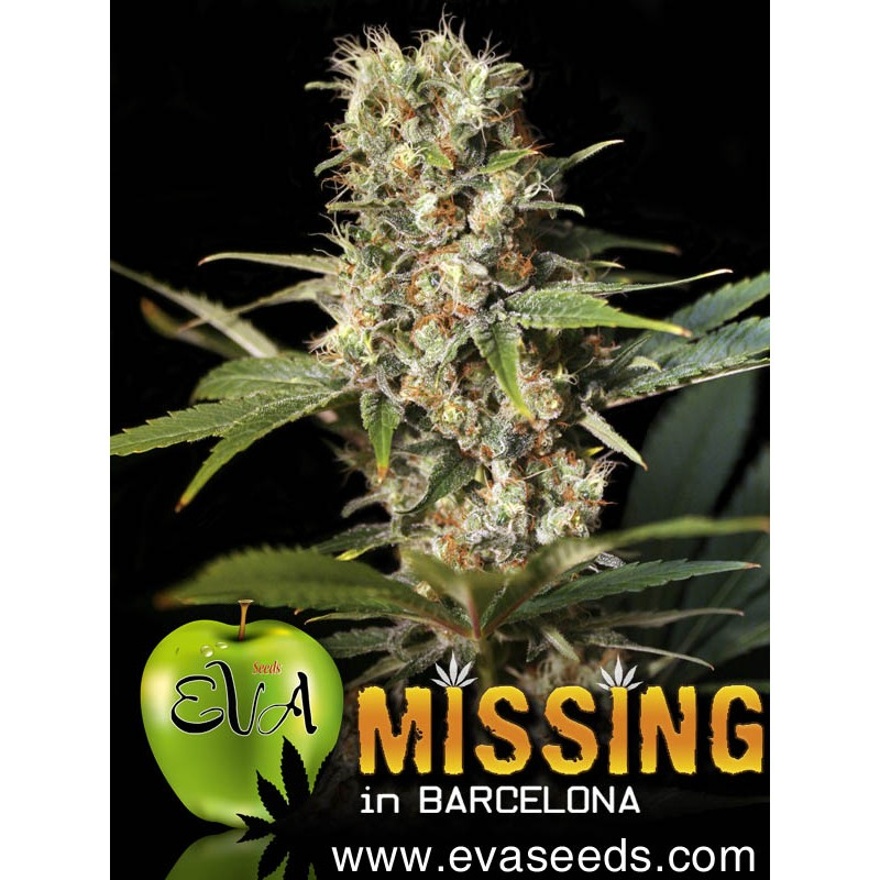 Missing in Barcelona (pack 3 semillas)
