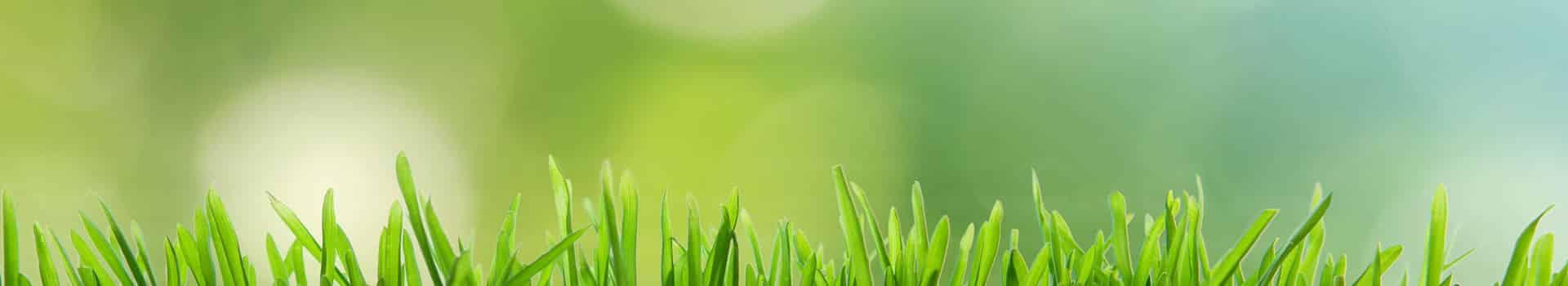 growshop-chile-online-santiago-maipu-cannabis-indoor-cultivo-marihuana-thc-cbd