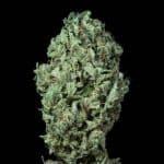 sour diesel auto dinafem seeds cannabis weed ganjah canamo growshop growcenter marihuana mejor expo toronto