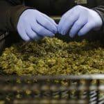 02 Marihuana, Cannabis, Latinoamerica, Colombia, Uruguay, Europa, Alemania, Cansativa, Comercio